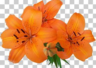Lilium Bulbiferum Flower Bouquet Garden Roses Tsvetochnyy Dvorik PNG