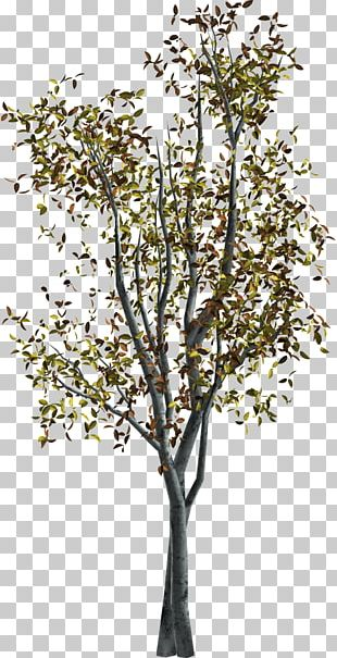 Twig Portable Network Graphics Adobe Photoshop Tree PNG