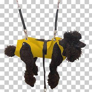 Dog Grooming Pet Hammock Leash PNG