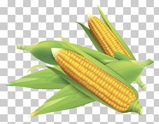 Corn On The Cob Maize Field Corn PNG