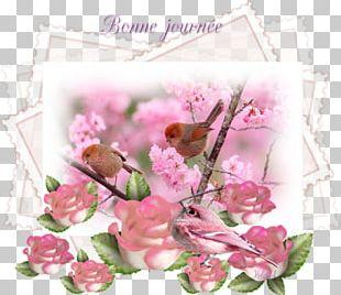 Garden Roses Desktop Bird Немцов мост Flower PNG