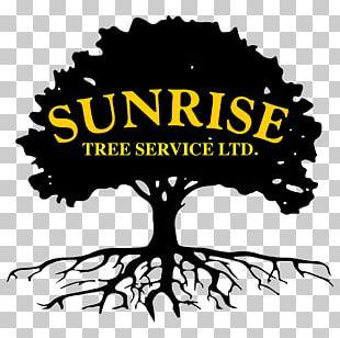 Swamp Spanish Oak English Oak Tree Silhouette PNG