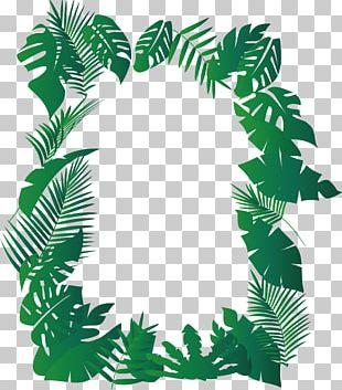 Musa Basjoo Leaf Ferme Exotique PNG