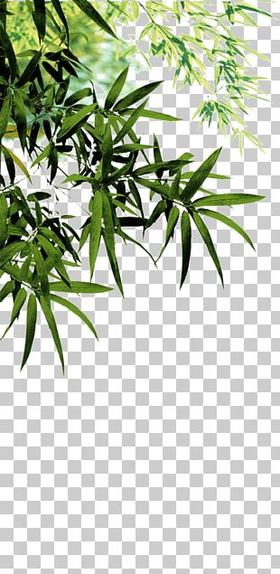 Anji County Bamboo Charcoal Software PNG