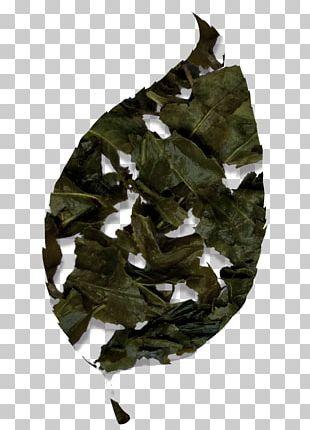 Bancha Tieguanyin Green Tea Japanese Cuisine PNG