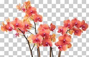 Cut Flowers Moth Orchids Floral Design Floristry PNG