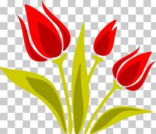 Indira Gandhi Memorial Tulip Garden Euclidean PNG