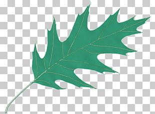 Leaf Computer Icons Oak PNG