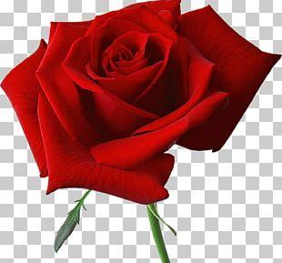 Rose Flower Love Wedding PNG