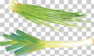 Allium Fistulosum Onion Garlic 蔬菜美食 Vegetable PNG