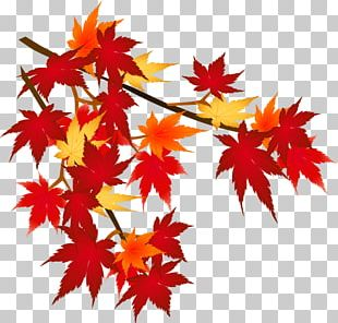 Autumn Leaf Color Mount Akagi Season PNG