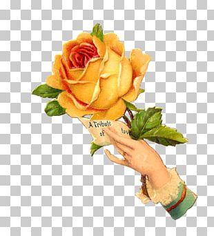 Flower Rose Vintage Clothing PNG