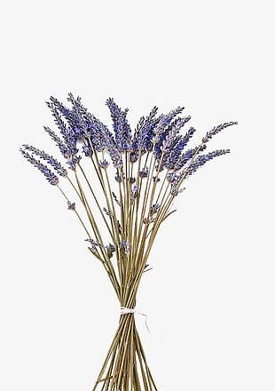 Purple Lavender With Dried Flowers PNG