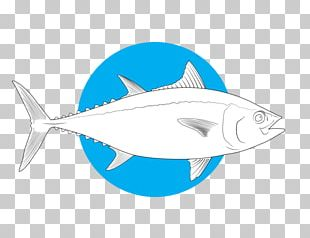 Shark Bony Fishes Marine Biology Salt Water Sportsman PNG