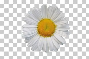 White PNG