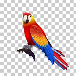 Parrot Macaw PNG