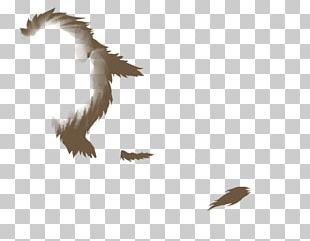 Bald Eagle Bird Beak Feather PNG