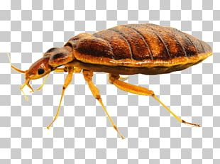Insect Bed Bug Control Techniques Bed Bug Bite Pest Control PNG