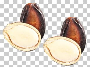 Nut Watermelon Seed Egusi PNG