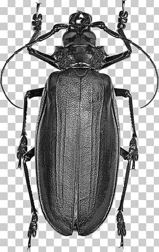 Titan Beetle Hercules Beetle Licinus Fly PNG