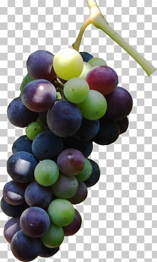 Sultana Grape Seed Oil Seedless Fruit Auglis PNG