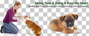 Dog Training Great Dane Puppy Train Your Dog Bulldog PNG