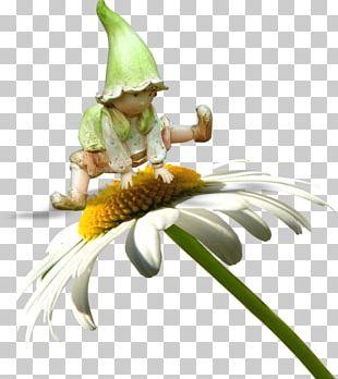 Flower Fairy Cartoon PNG