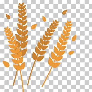 Plant Leaves Leaf Shape PNG