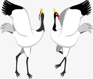 Dancing Red-crowned Crane PNG