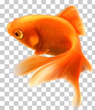 Goldfish Aquarium Tropical Fish PNG