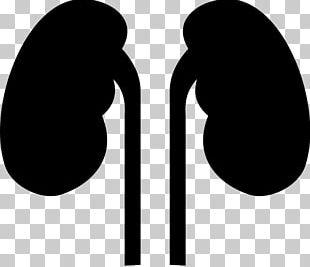 Kidney Human Body Organ PNG