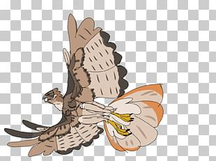 Owl Wing Insect Cartoon PNG