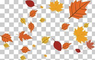 Calendar November Maple Leaf Year PNG