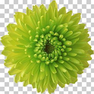 Flower Green Desktop Display Resolution PNG