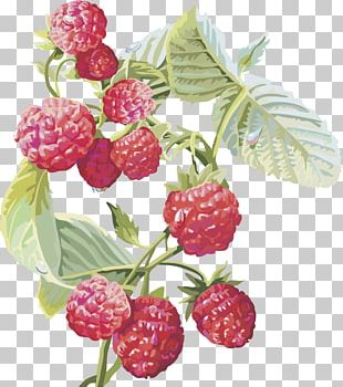 Frutti Di Bosco Red Raspberry Musk Strawberry Fruit PNG