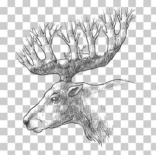 Red Deer Gray Wolf Drawing PNG