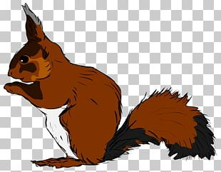 Squirrel Drawing Scalable Graphics PNG