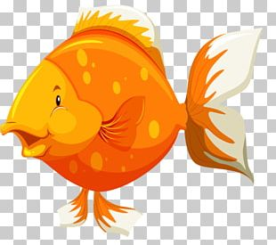Goldfish Fish Anatomy PNG