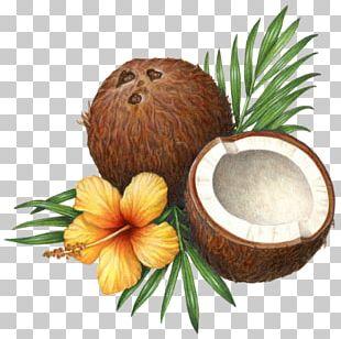 Coconut Water Coconut Milk Coconut Oil Health PNG