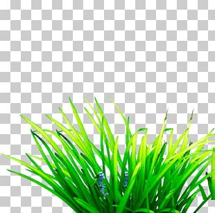 Scutch Grass Computer File PNG
