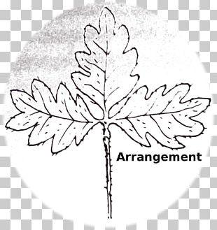 Floral Design Leaf Line Art PNG
