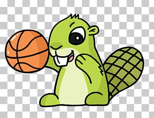 Basketball Adsy PNG