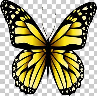 Monarch Butterfly Yellow Stock Photography PNG
