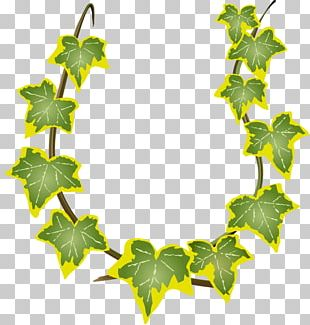 Green Leaves Rattan PNG