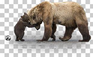 Grizzly Bear Alaska Peninsula Brown Bear Giant Panda PNG