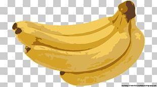 Latundan Banana Pisang Goreng Saba Banana Fruit PNG