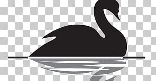 The Black Swan: The Impact Of The Highly Improbable Black Swan Theory Bird PNG
