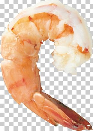 Shrimp Prawn Cocktail Seafood Cooking PNG