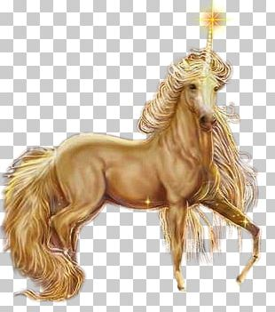 Unicorn Pegasus Horse Fairy Elf PNG