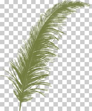 Feather Bird Color PNG